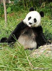 大熊猫繁育基地